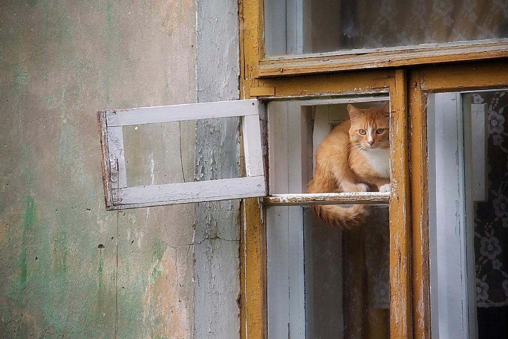 Муромские кошки и окошки 02