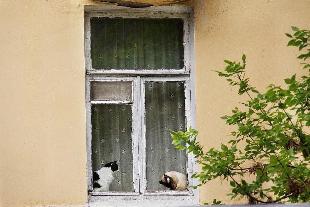 Муромские кошки и окошки 03