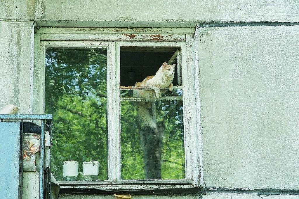 Муромские кошки и окошки 05