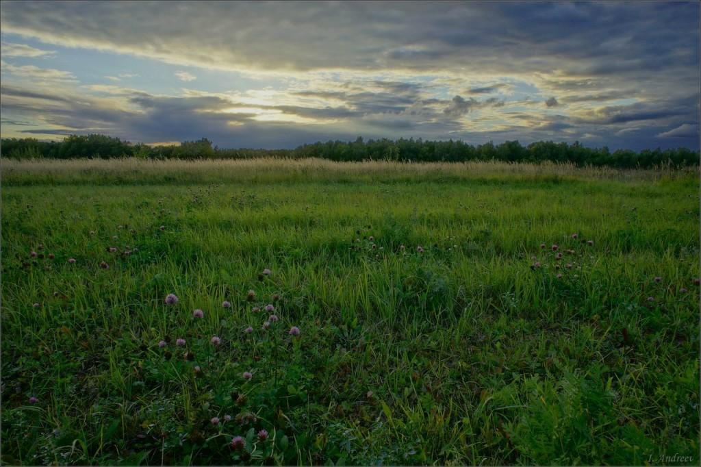 На закате у сенного поля (Суздальский район)