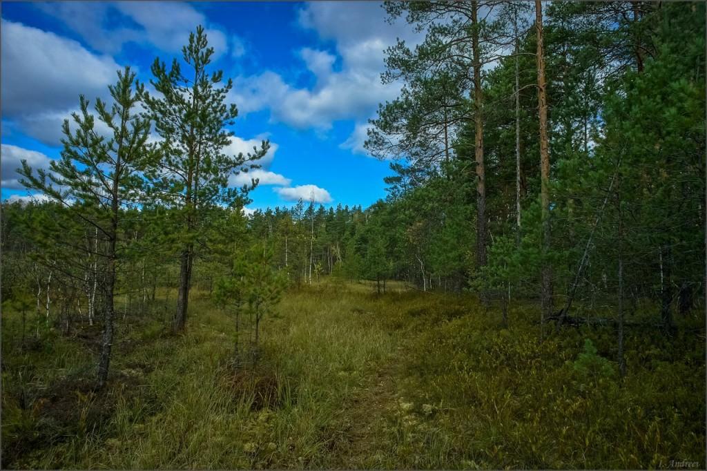 На побережье лесного озера Свято (Камешковский район)