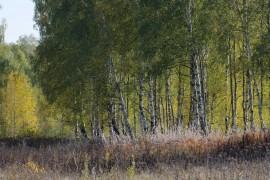 Осенние зарисовки близ Костерёво Владимирской области