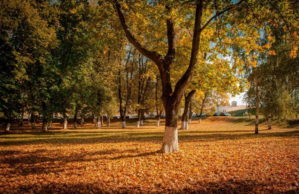 Осенний Парк Пушкина (Владимир) 06