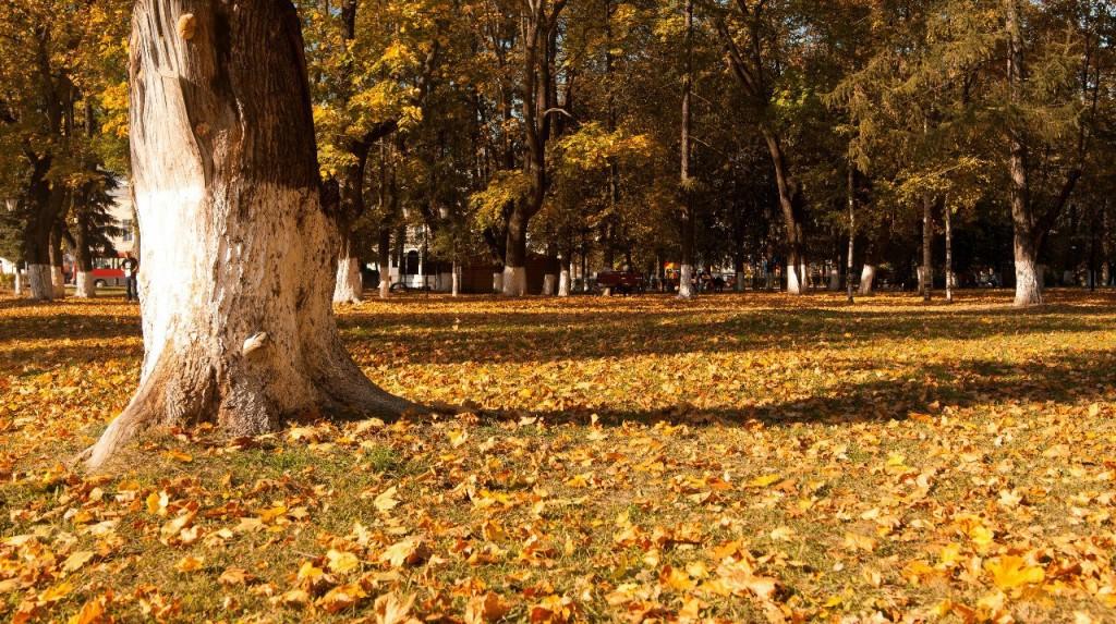 Осенний Парк Пушкина (Владимир) 07