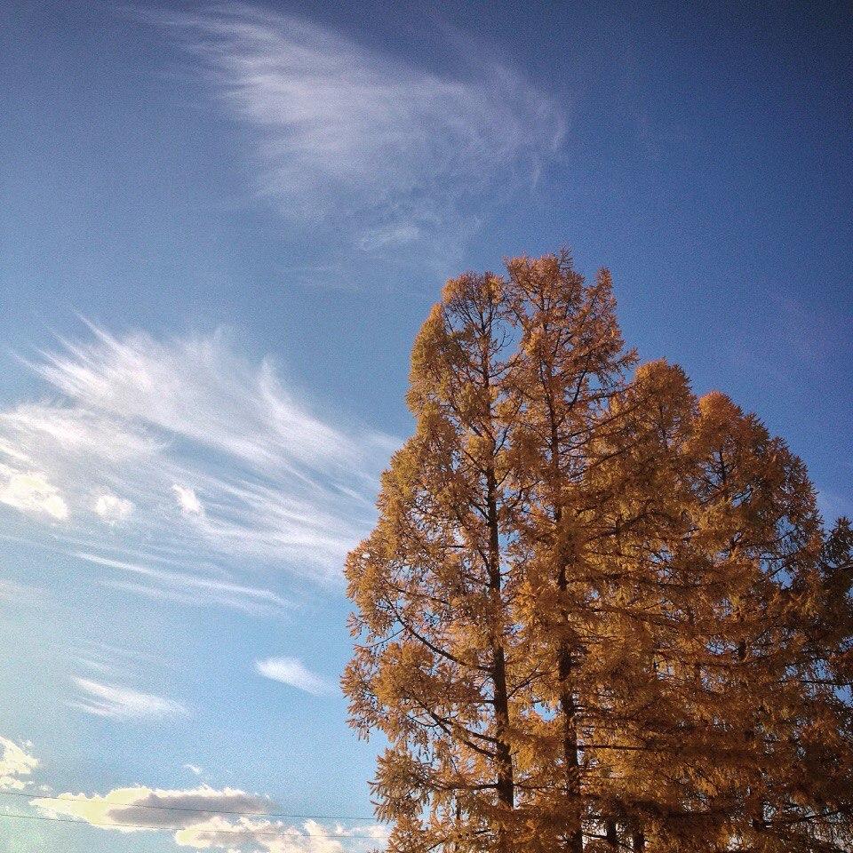 Осень во Владимирской области