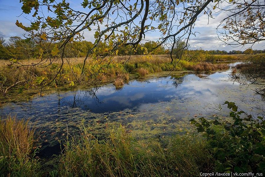Осень в Клязьменской пойме 06