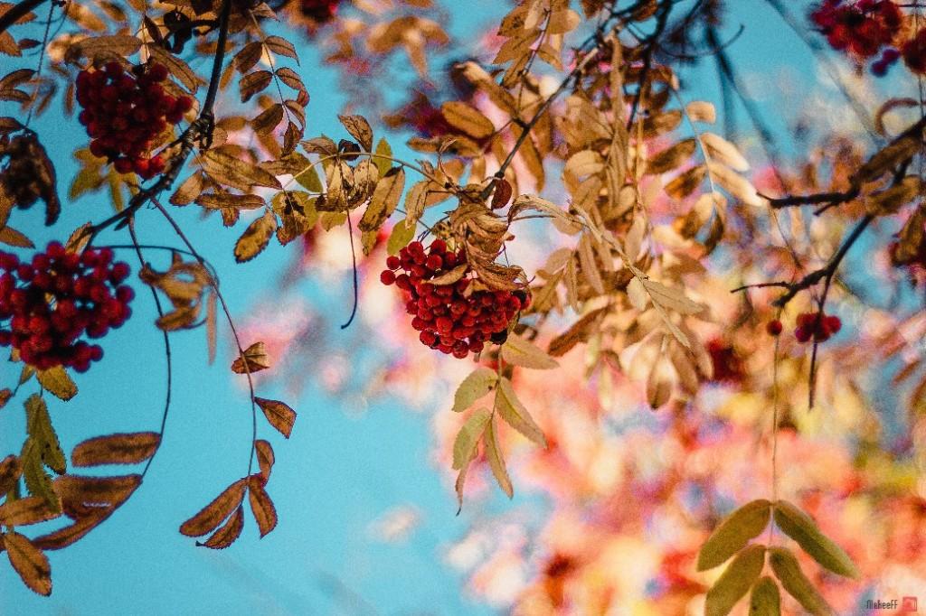 Осень в городе. Автор - Александр Макеев 02