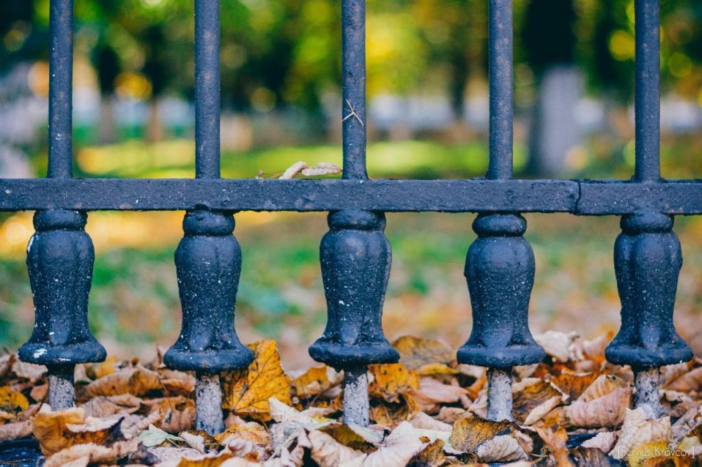 Осень 2015 (листья, пейзажи и все такое) 06