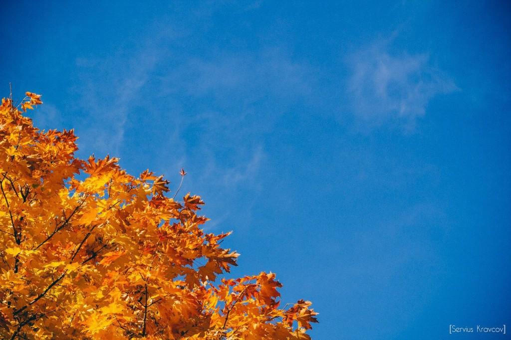 Осень 2015 (листья, пейзажи и все такое) 09