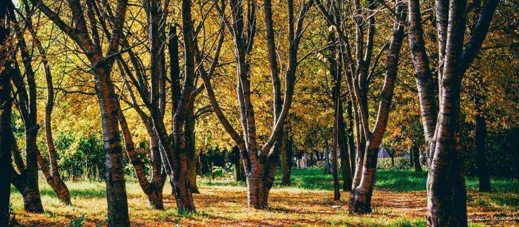 Осень 2015 (листья, пейзажи и все такое) 10