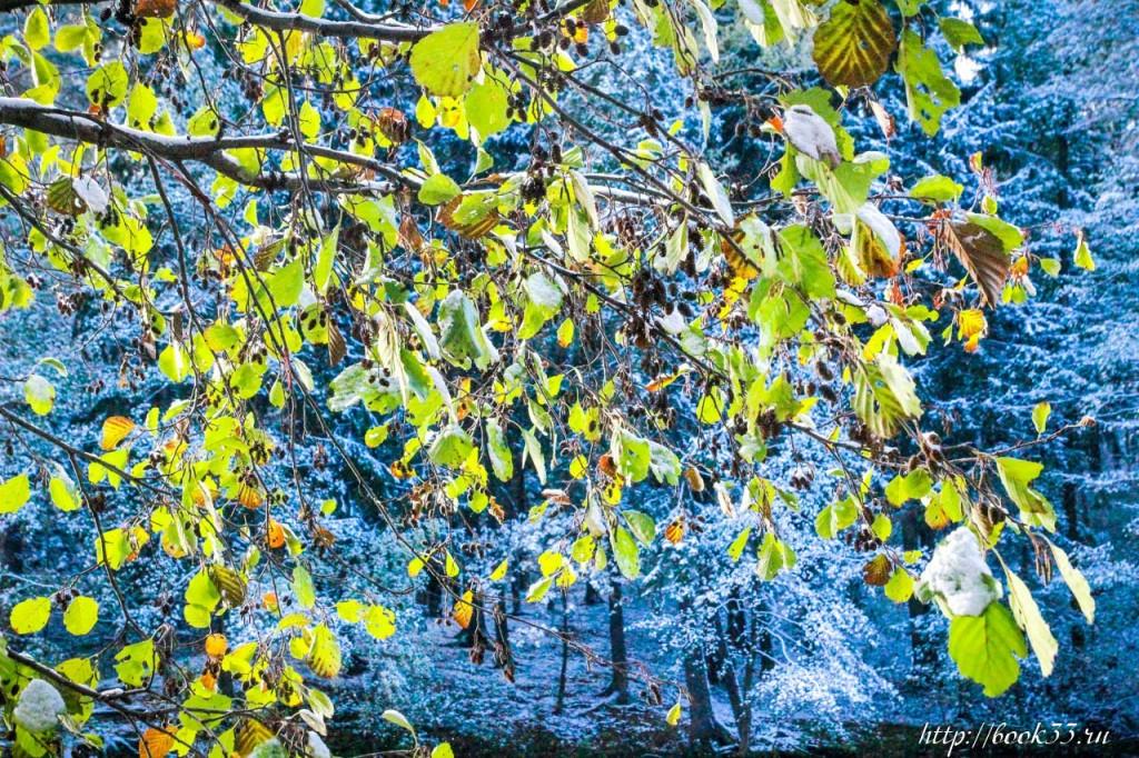 Первый снег на Вербовском 04