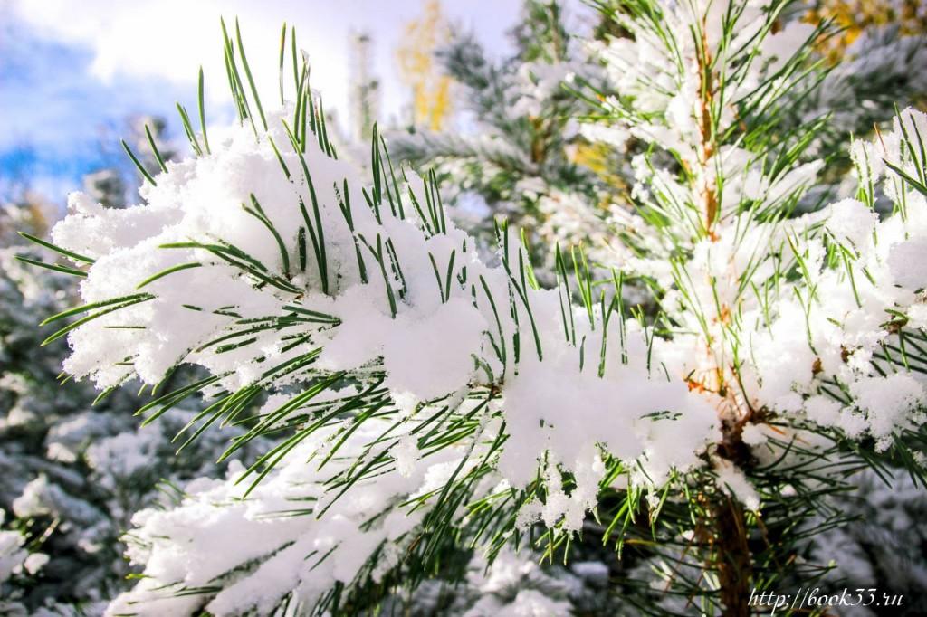 Первый снег на Вербовском 06
