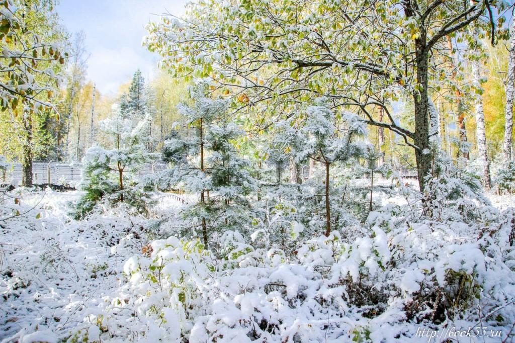 Первый снег на Вербовском 08