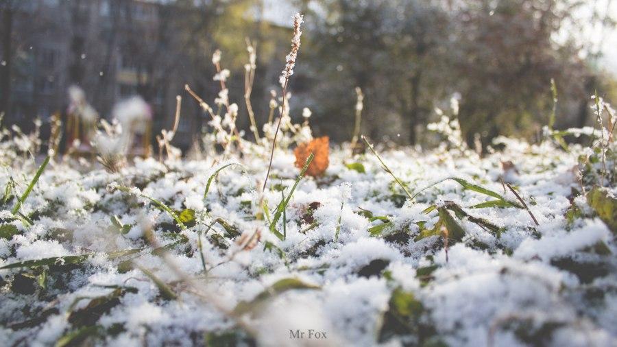 Первый снег 2015 01
