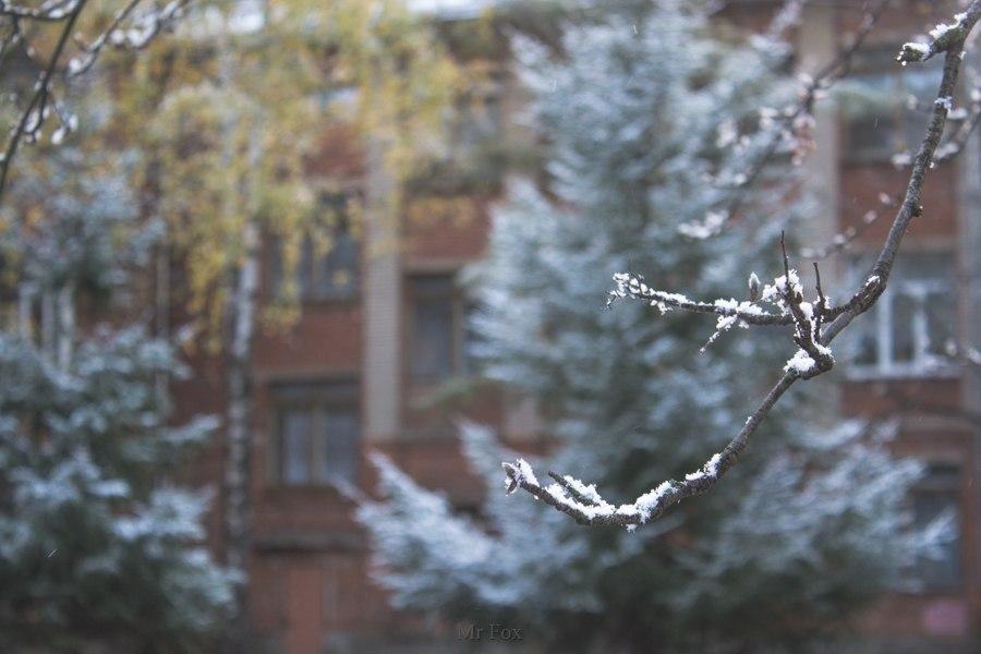 Первый снег 2015 03