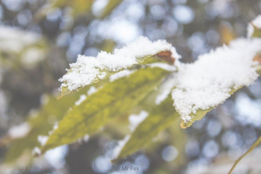 Первый снег 2015 05