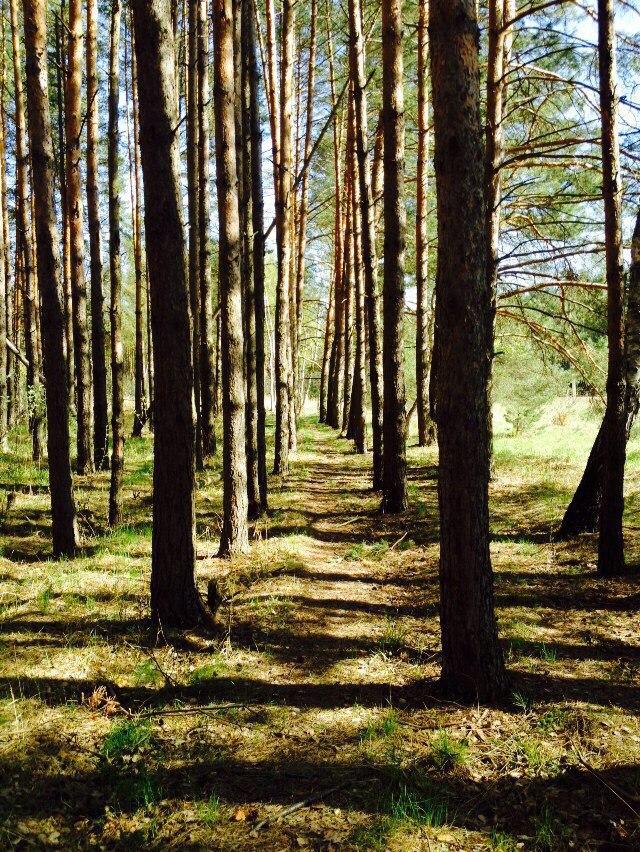 Природа Киржачского района 05