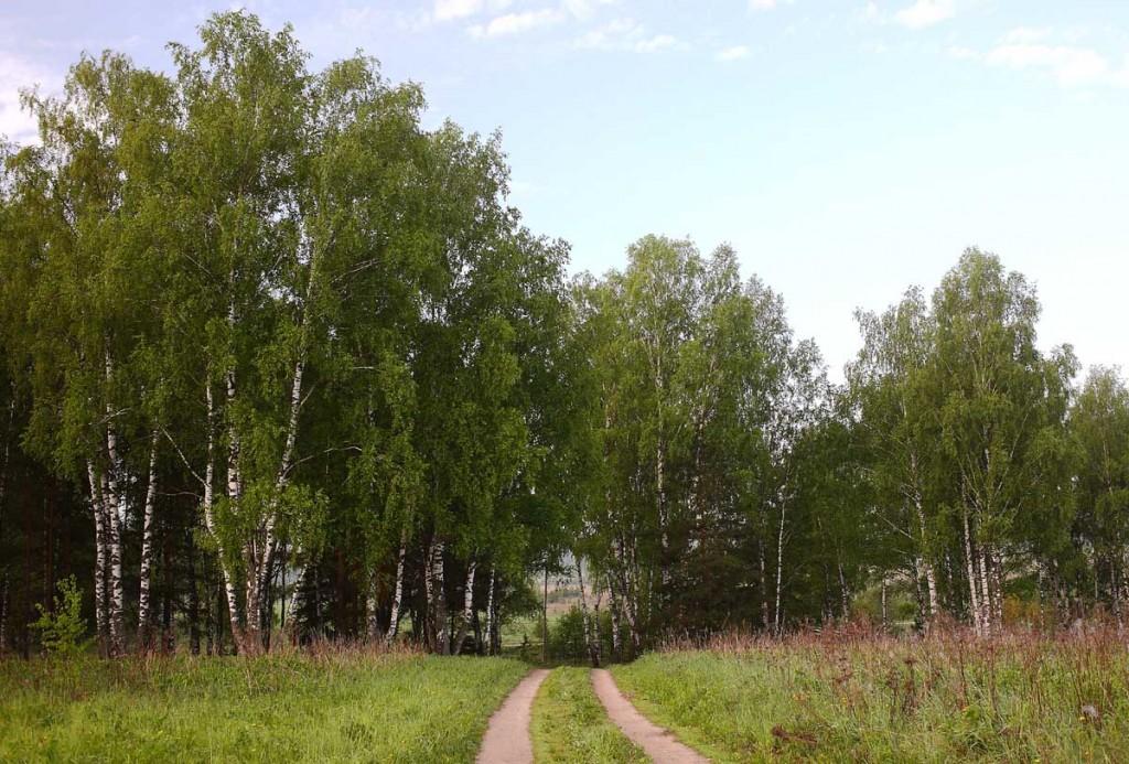 Природа Ковровского района от Павла Артюшина 01