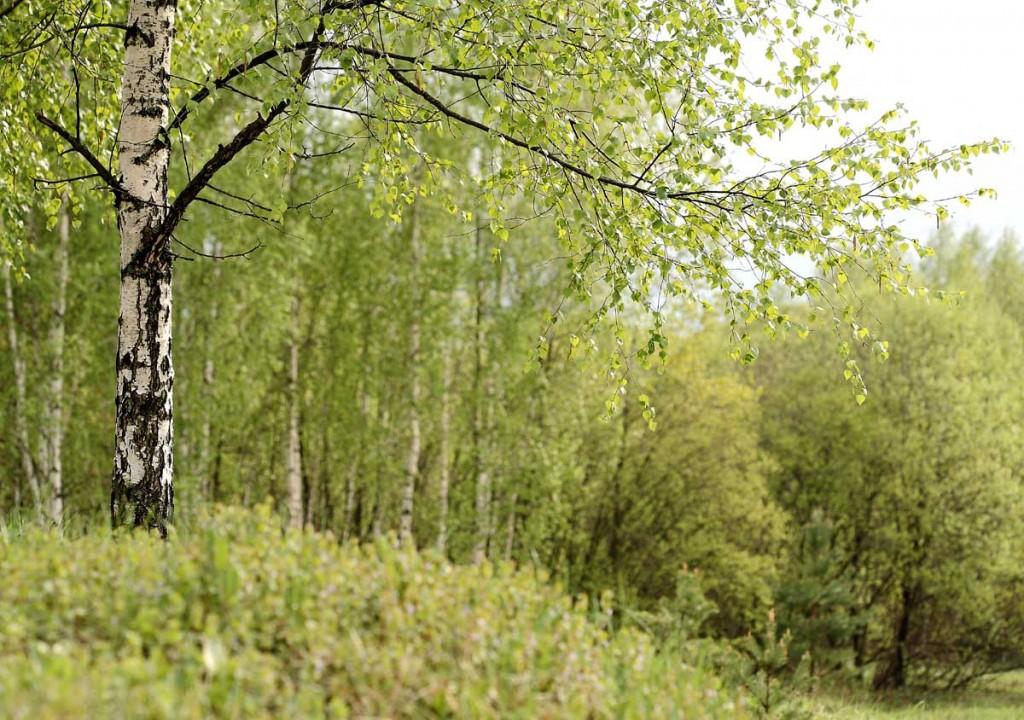 Природа Ковровского района от Павла Артюшина 02