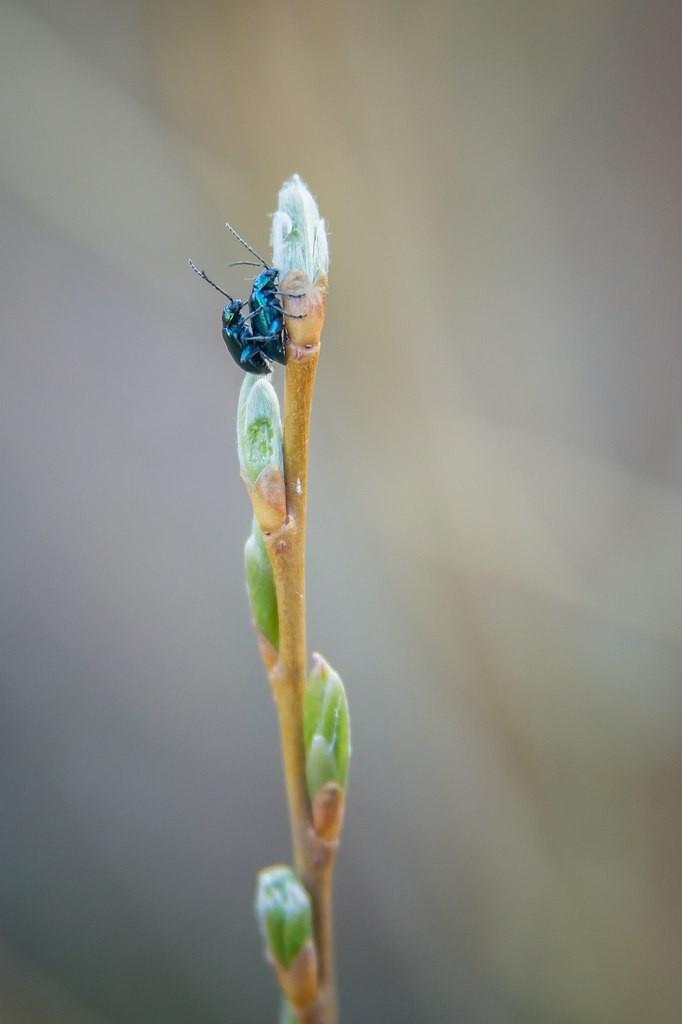 Природа нашего края Ч. 5 06