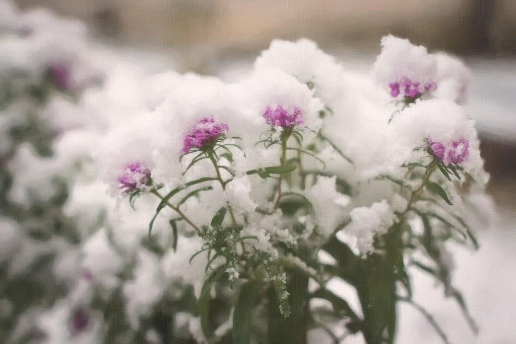 Снежные картины 03