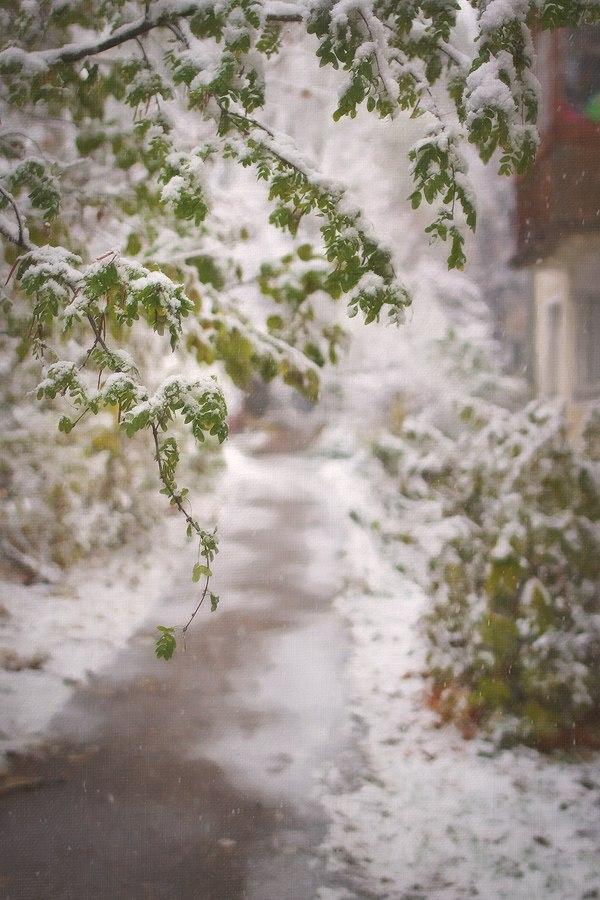 Снежные картины 09