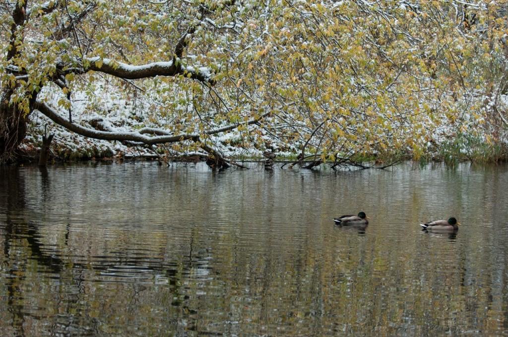 Снежный Владимир (9 октября) 05