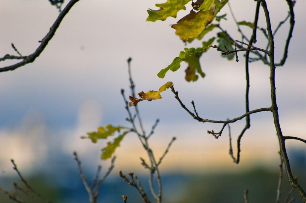 Снежный Владимир (9 октября) 10
