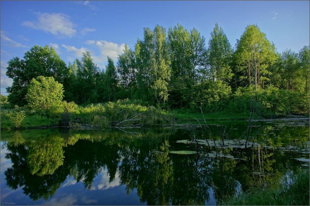 Старый пруд летним вечером (Суздальский район, 09.06.2015)