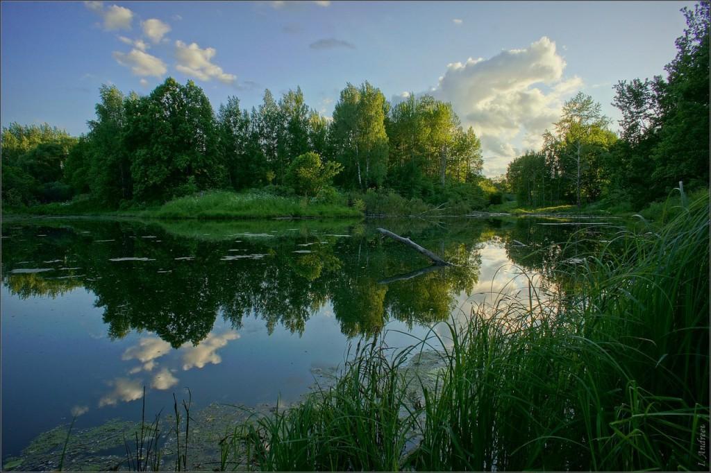 Старый пруд летним вечером 01