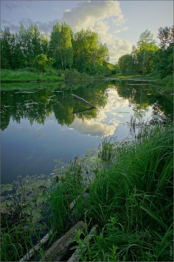 Старый пруд летним вечером 02