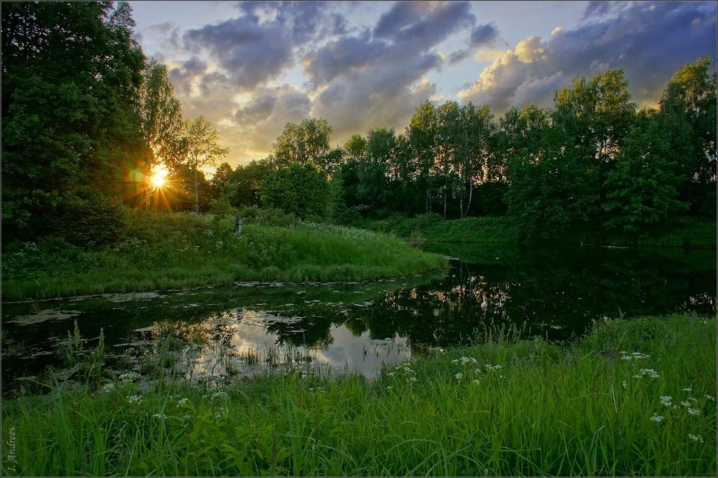 Старый пруд летним вечером 03