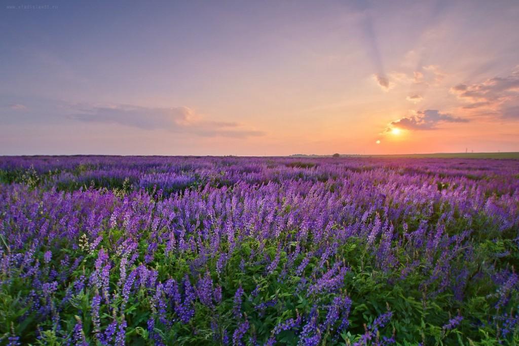 Фиолетовый закат на Владимирском поле