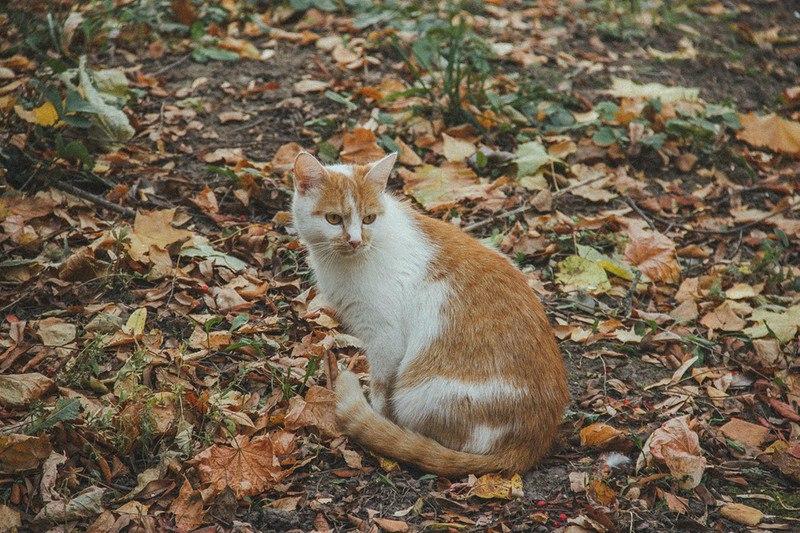 Фотосессия Владимирских котиков 02