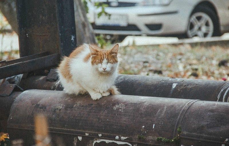 Фотосессия Владимирских котиков 03