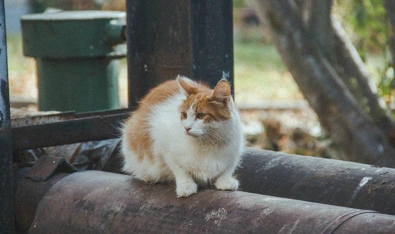 Фотосессия Владимирских котиков 04