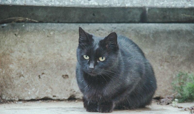Фотосессия Владимирских котиков 06