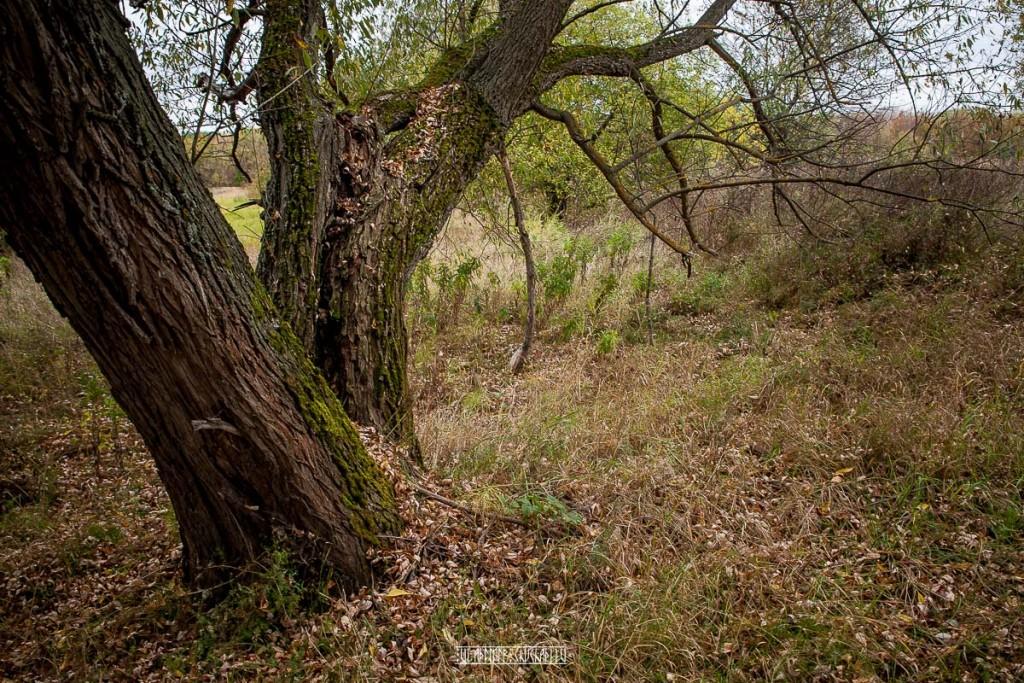 Холодная осень в Клязьменской пойме 03