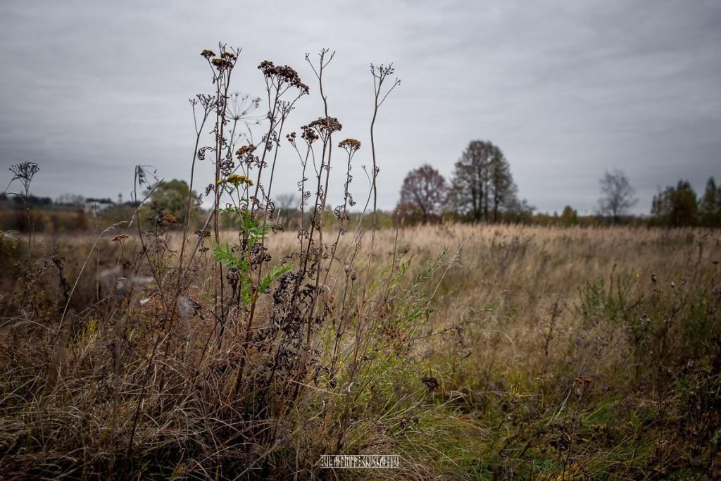 Холодная осень в Клязьменской пойме 04
