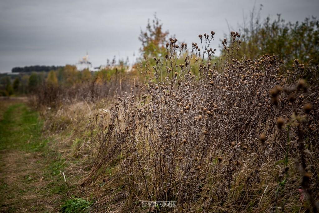 Холодная осень в Клязьменской пойме 08