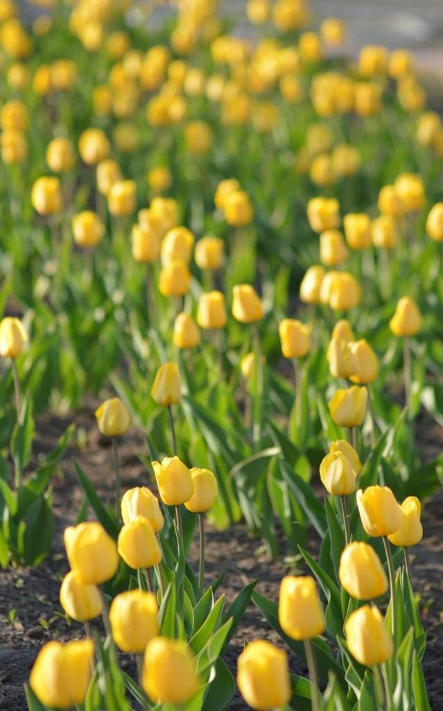 Цветы Мурома 03