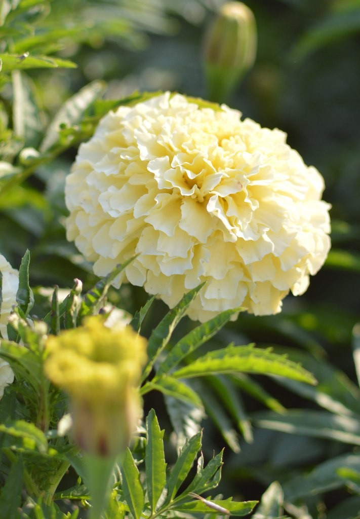 Цветы Мурома 04