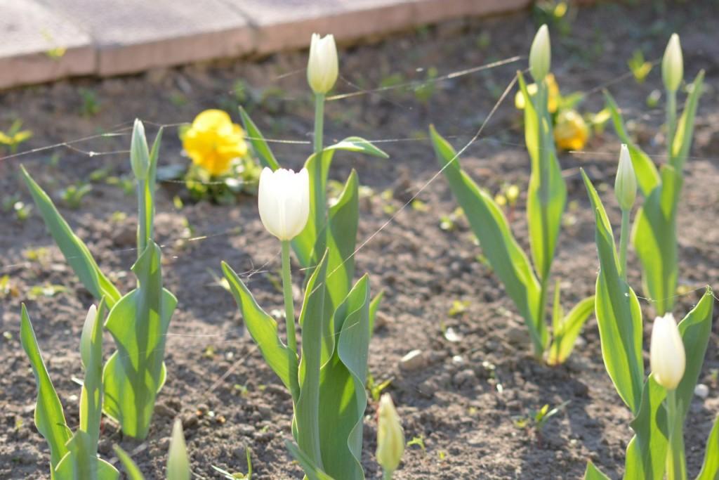 Цветы Мурома 05