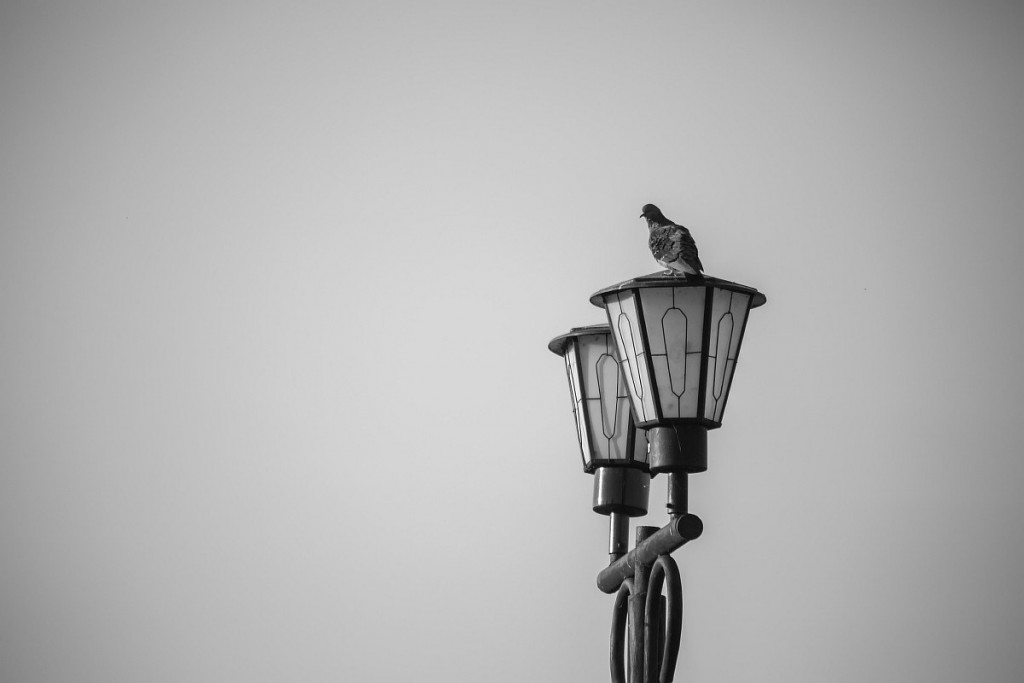 Черно-белый Муром 03