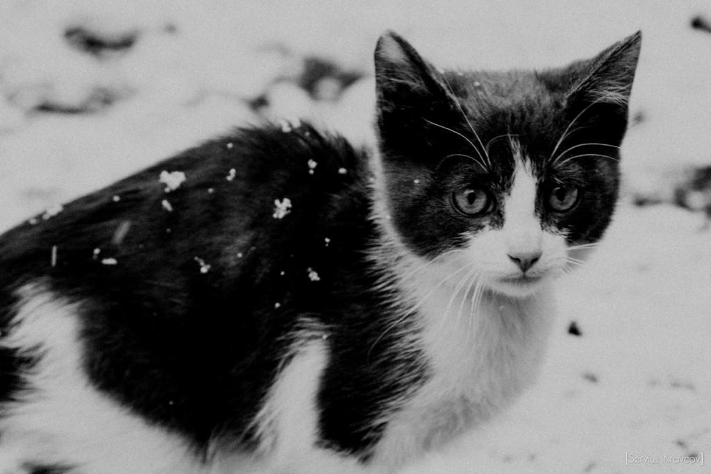 Let It Snow! Let It Snow! Let It Snow! 02