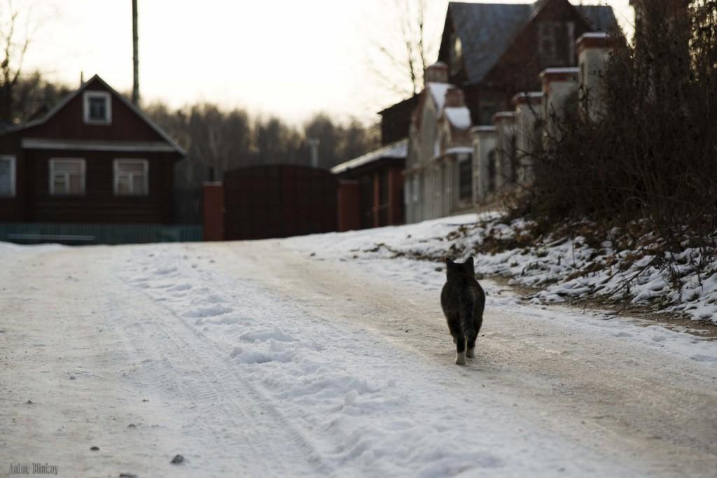 Борисо-Глебская кошка 05