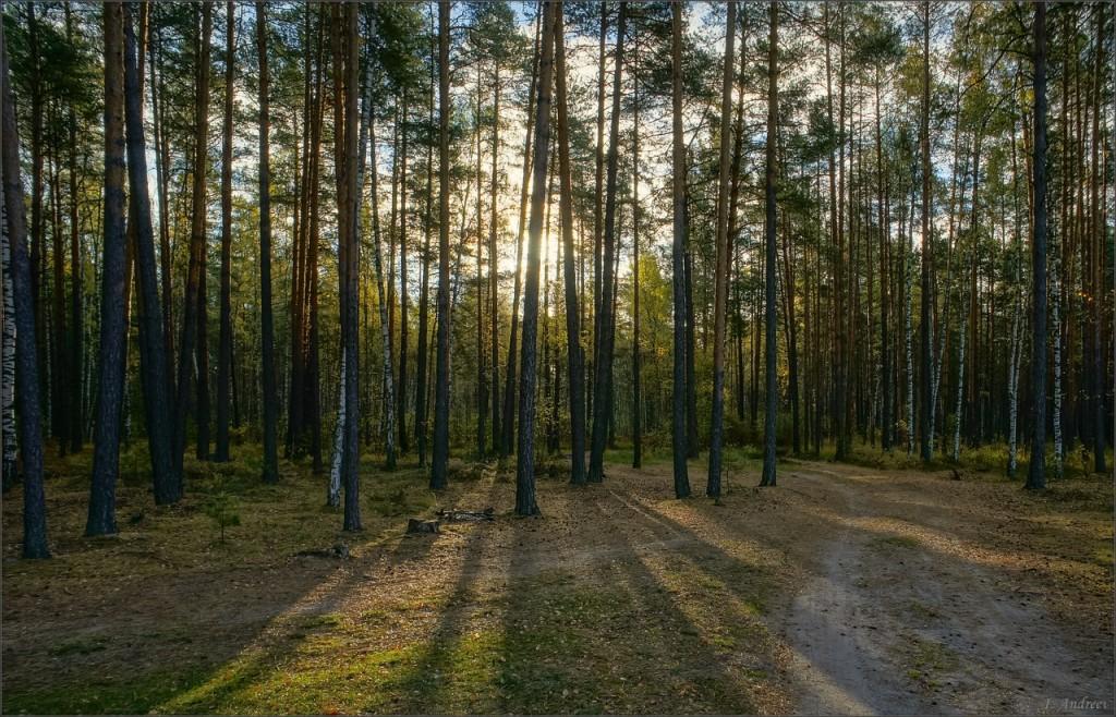 В октябрьском усвятском лесу (Камешковский район) 01
