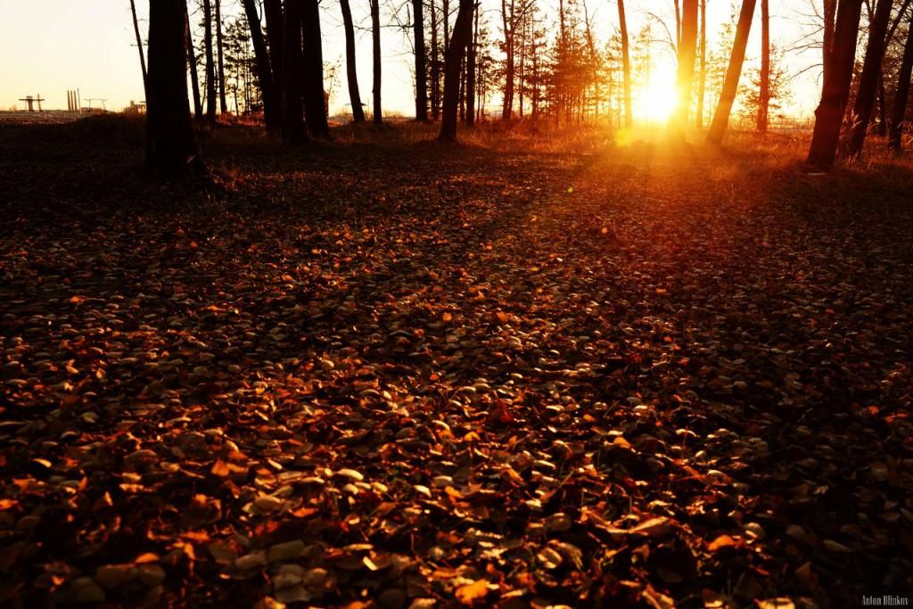 В осеннем лесу 02