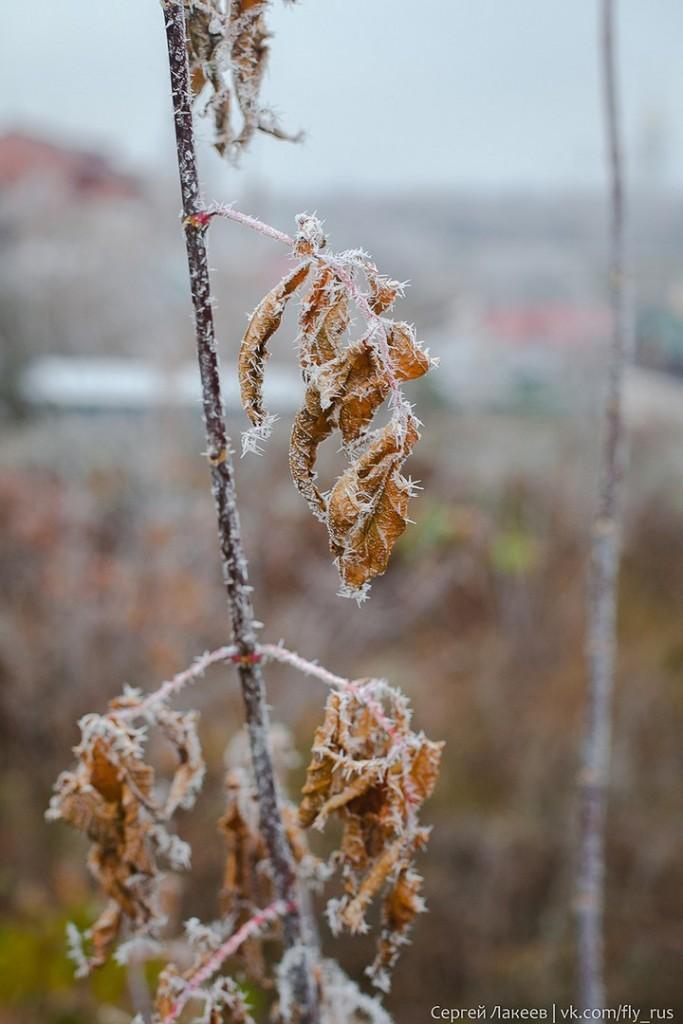 Ноябрьская осень во Владимире 06
