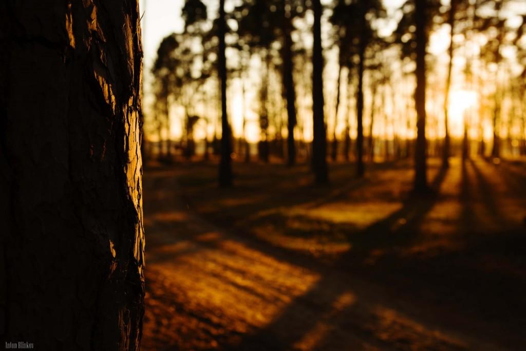 Ноябрьский закат в сосновом бору 01